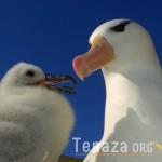 Albatrosses West Point